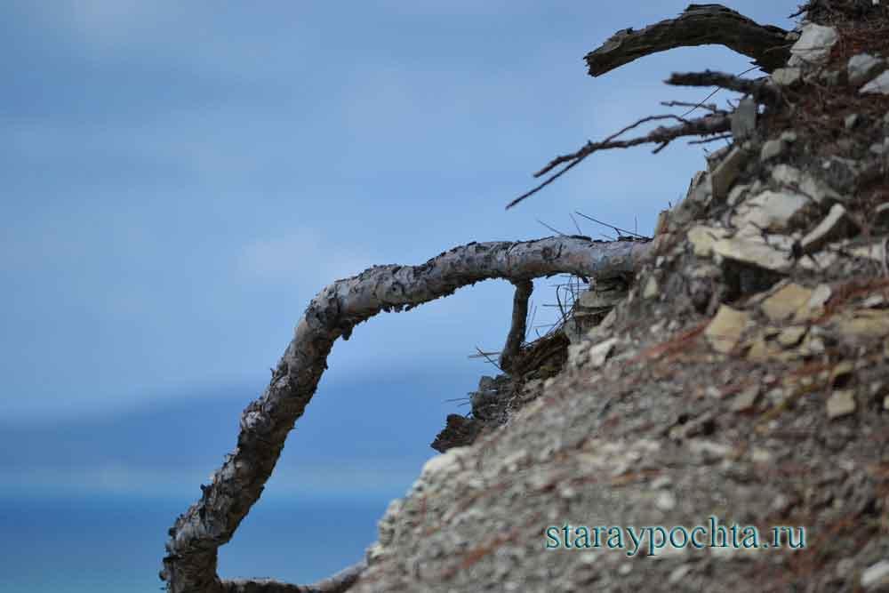 Скалистый берег. Фото (211) Ю. Зотов, 2013