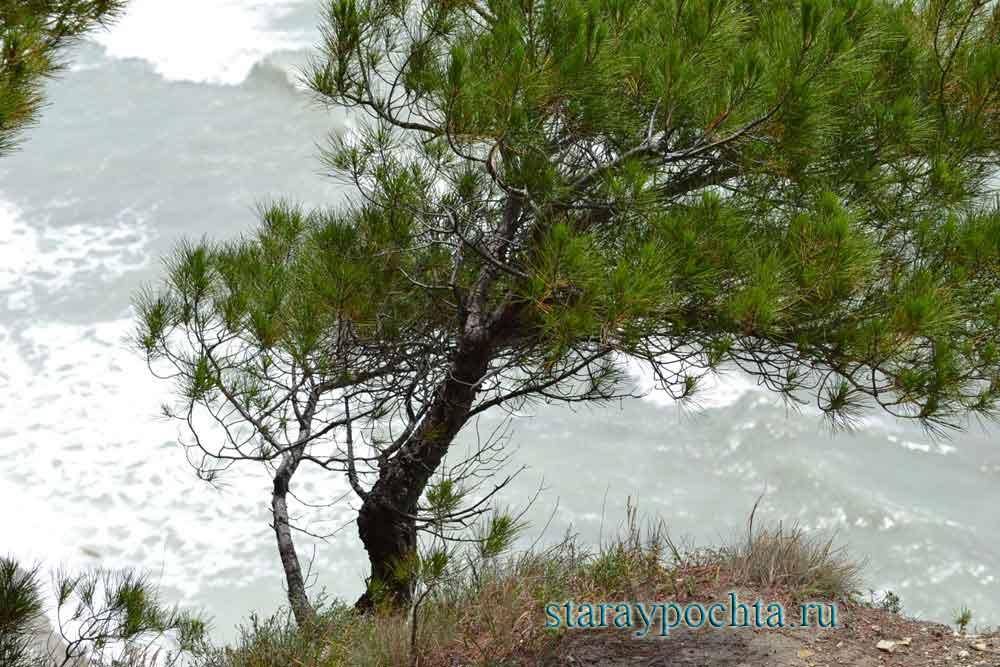 Сосна на скале. Фото (212) Ю. Зотов, 2013