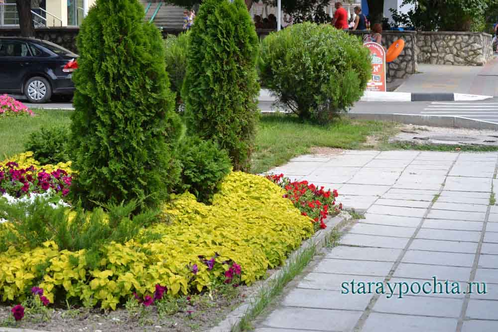 Цветник у поселковой администрации. Фото (429) Ю. Зотов, 2013